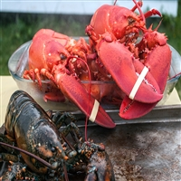 JUMBO XL LOBSTERS  /  3.0 - 3.45 lbs.