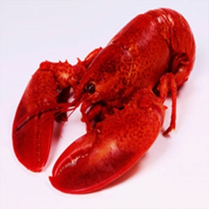 *20 JUMBO LOBSTERS  2.0 - 2.25 lbs.