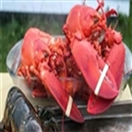 *25 MEDIUM LOBSTERS - (1.25-1.50 LBS)