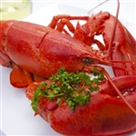 *12 Jumbo (2.00-2.25lbs) Lobsters + 2 Chick Lobsters Free